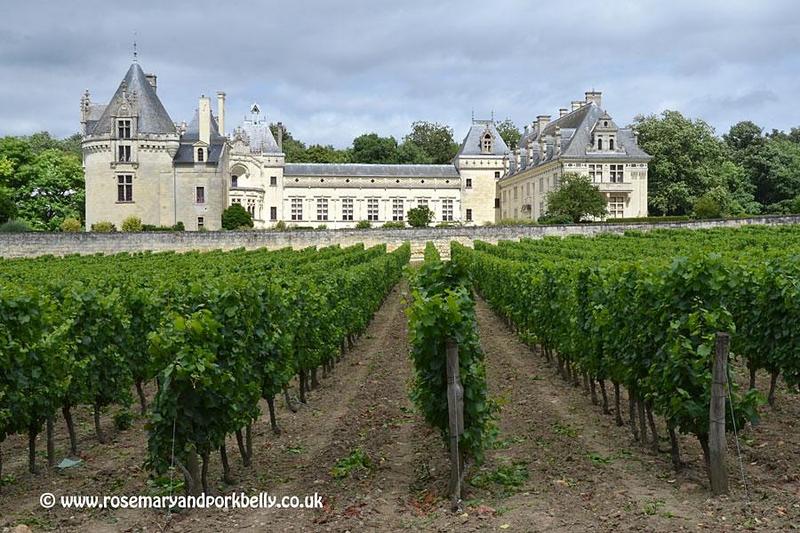 Château de Brézé vineyard Loire France