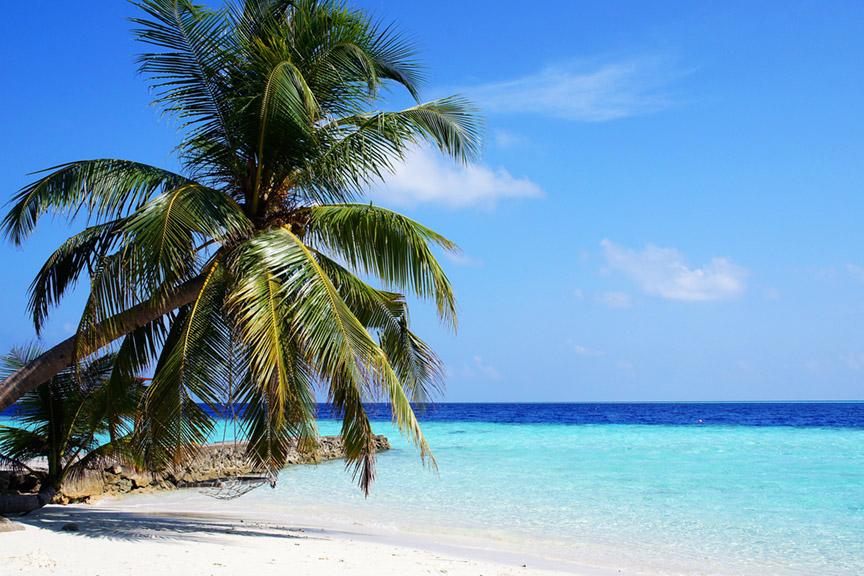 Palm tree and beach - Maldives